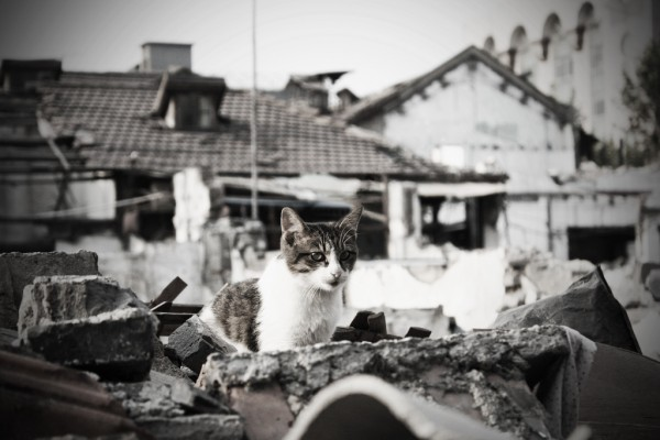 Kitty amidst rubble