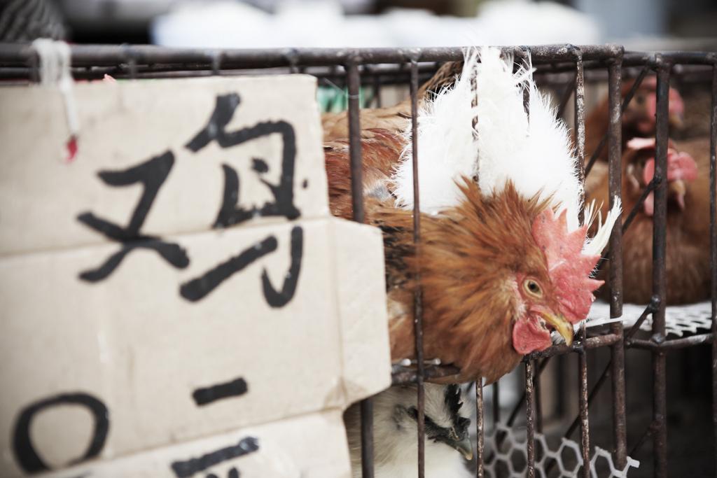 Animal Farm 01