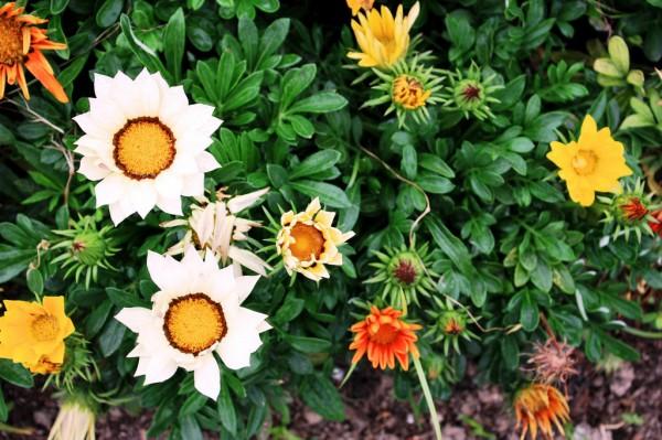 Shanghai Flowers 03