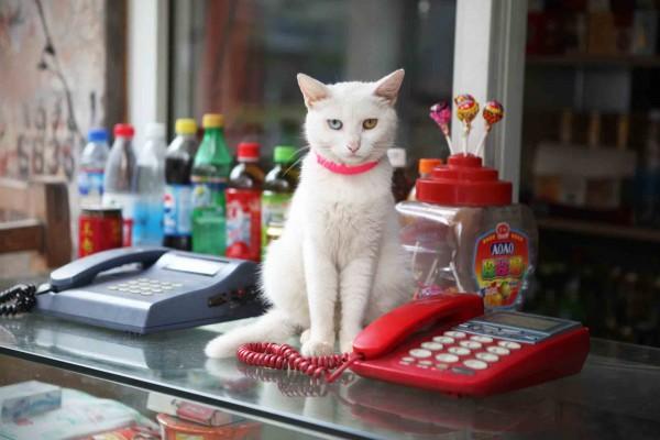 Cat in Zhabei