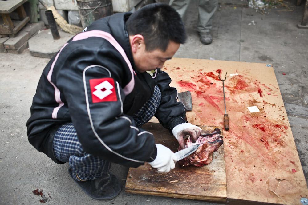 Beijing dog 01